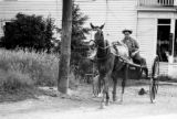 Jasper Wood Collection: Amish man in buggy